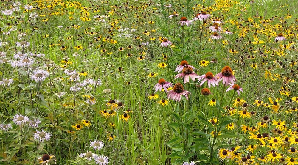 establishing pollinator habitat