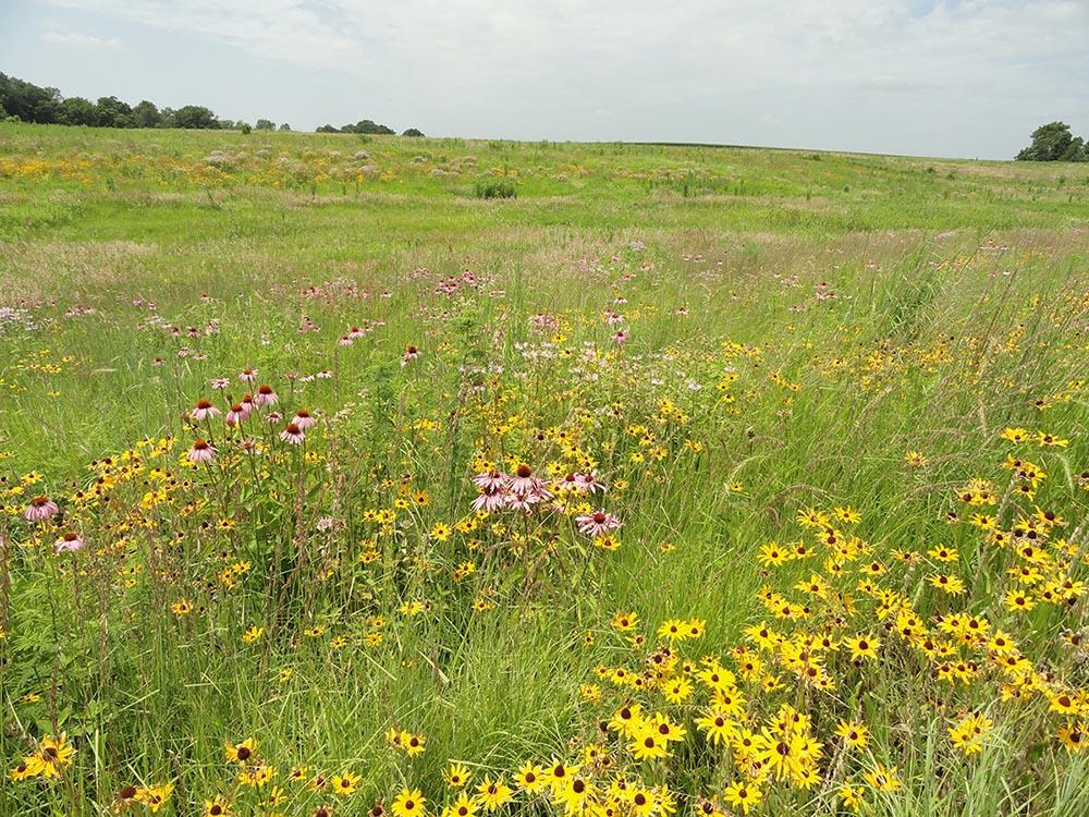 CRP CP-42 pollinator habitat